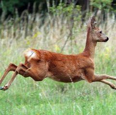 Ловните събития през МАЙ и дивечът който се ловува