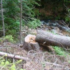 Без книжка за отсечени незаконно дървета и бракониерство
