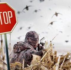 МЗХ: Забранява се лова и разселването на пернат дивеч в цялата страна (заповед)